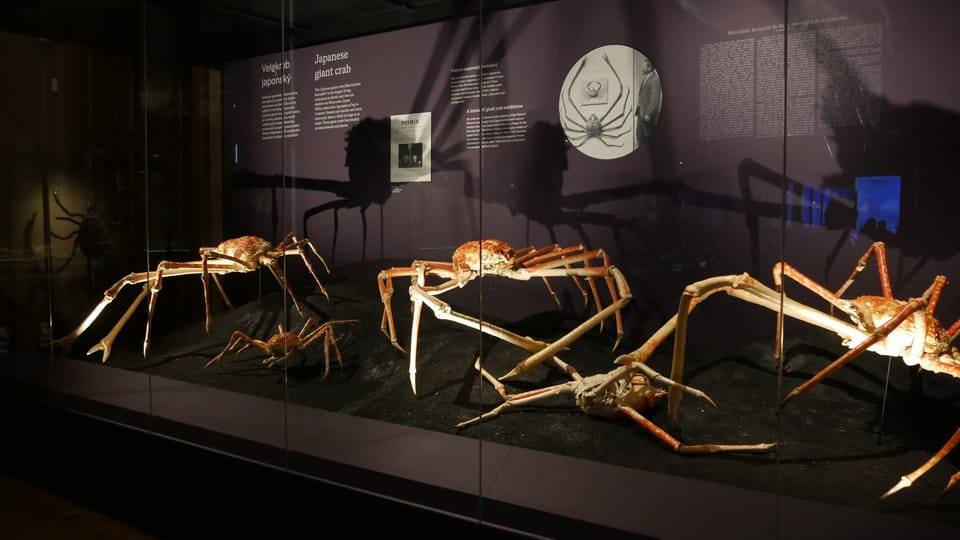 L'exposition 'Les Merveilles de l'Evolution'   Photo: Zoé Samin,  Radio Prague Int.