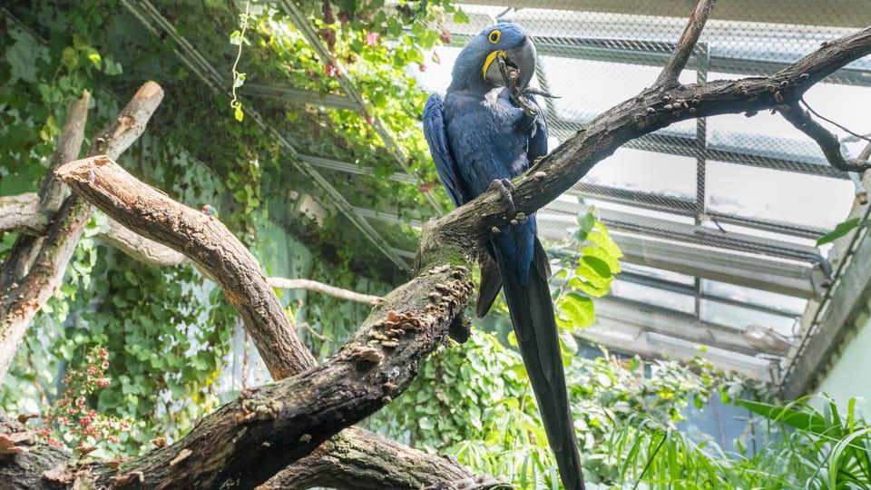 Photo: David Kraus,  Zoo Praha