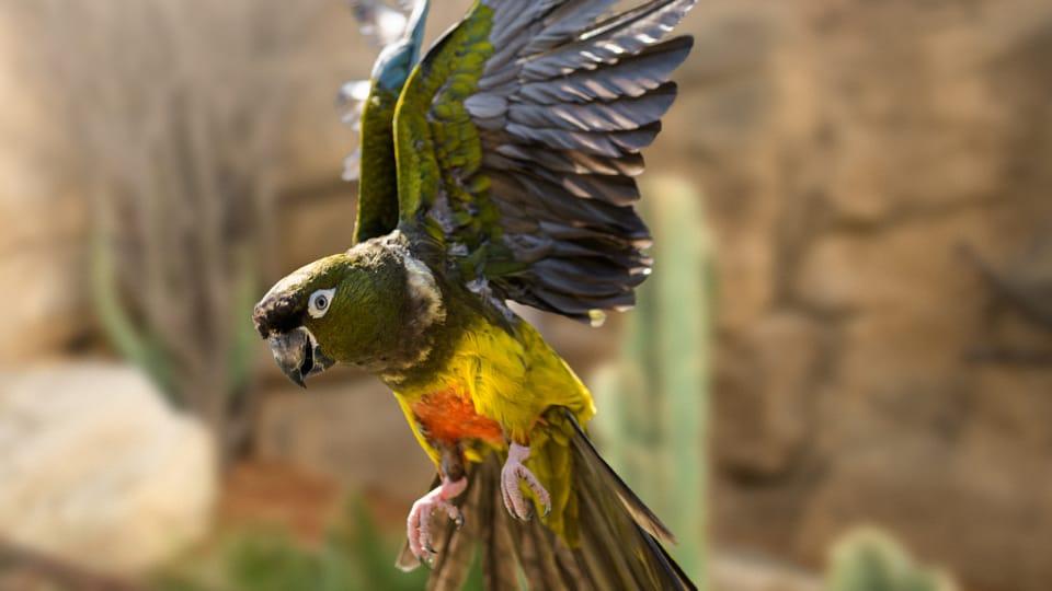 Photo: Petr Hamerník,  Zoo Praha