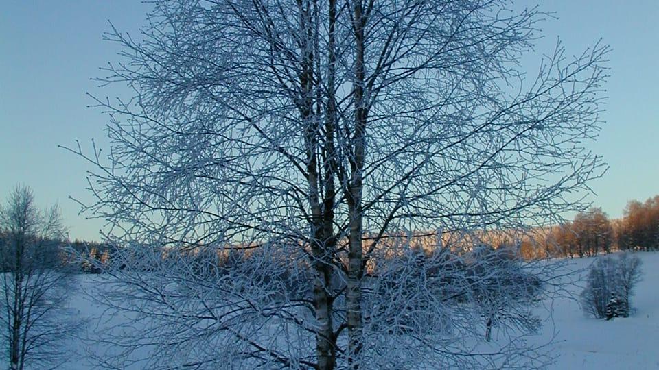 Šumava,  photo: Jana Šustová