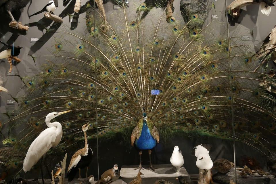 L'exposition 'Les Merveilles de l'Evolution' | Photo: Zoé Samin,  Radio Prague Int.