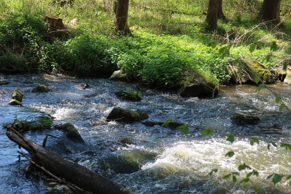 Le ruisseau Konopišťský à Měsíční údolí   Photo: Štěpánka Budková,  Radio Prague Int.