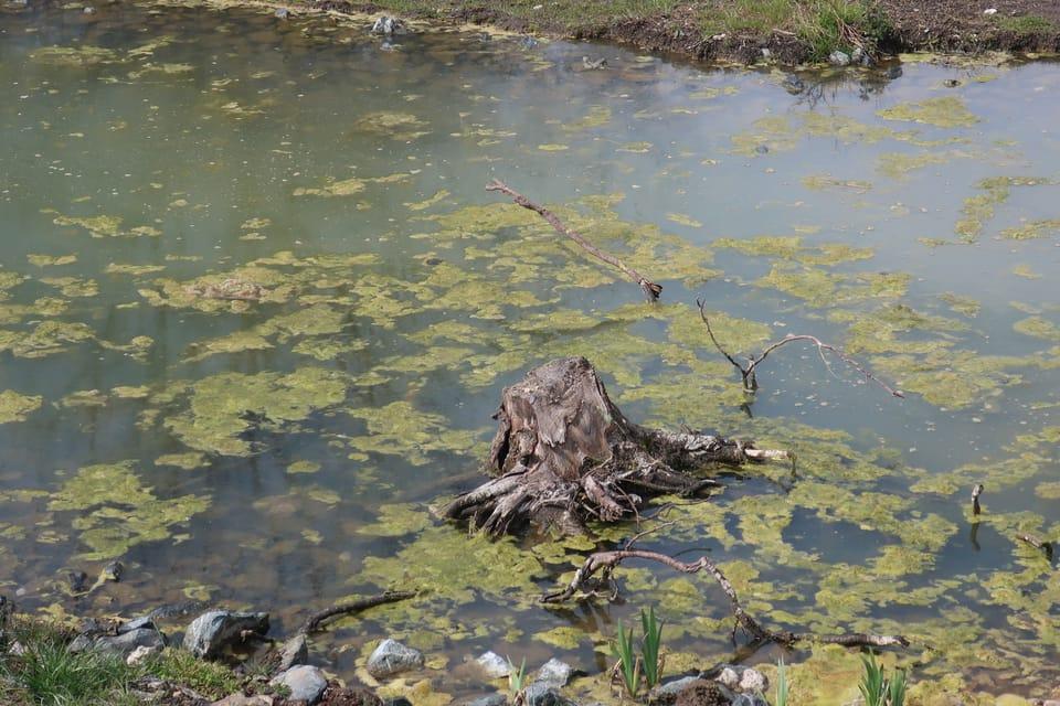 La petite rivière Rokytka à Prague - Kyje | Photo: Štěpánka Budková,  Radio Prague Int.