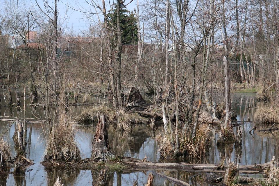 L'étang Pískovna à Prague  - Dolní Počernice | Photo: Štěpánka Budková,  Radio Prague Int.